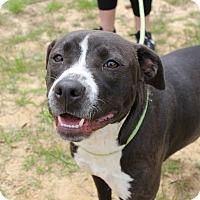 Adopt A Pet :: Reidun - Macon, GA