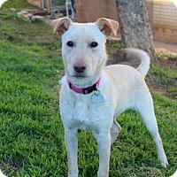 Adopt A Pet :: Prancer - Shreveport, LA
