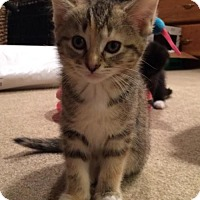 Adopt A Pet :: Kelly - ADOPTION PENDING! - Potomac, MD