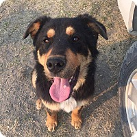 Adopt A Pet :: ZEKE - Winnipeg, MB