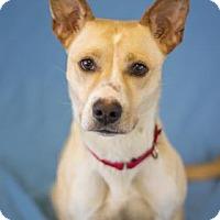 Adopt A Pet :: Skye - Bradenton, FL