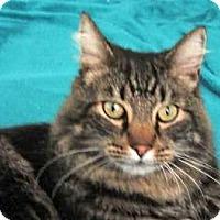 Adopt A Pet :: Ziggy - Davis, CA