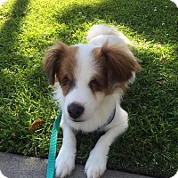 Adopt A Pet :: Hope - Fullerton, CA