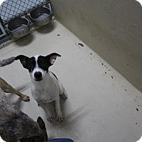 Adopt A Pet :: A28 SUNDAY - Odessa, TX