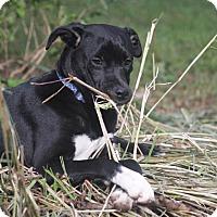 Adopt A Pet :: Macy - Sagaponack, NY