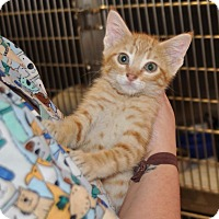 Adopt A Pet :: Cheese - Sunrise Beach, MO