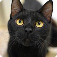Adopt A Pet :: Kite - Aiken, SC