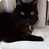 Adopt A Pet :: Dunkin - Umatilla, FL