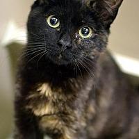 Adopt A Pet :: Lemon - Philadelphia, PA