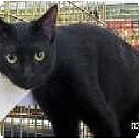 Adopt A Pet :: Guido - Sacramento, CA