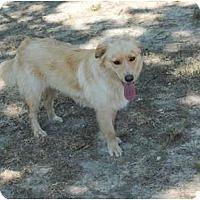 Adopt A Pet :: Santana - New Boston, NH