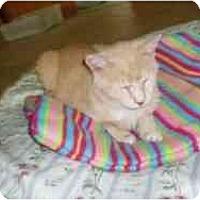 Adopt A Pet :: Dale - Hamburg, NY