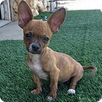 Adopt A Pet :: Gizmo - Tustin, CA