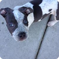 Adopt A Pet :: Delphinus - San Diego, CA