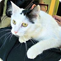 Adopt A Pet :: Sarah - Toledo, OH
