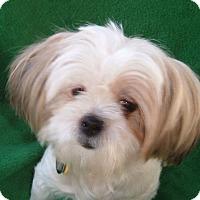 Adopt A Pet :: PAIGE - Eden Prairie, MN