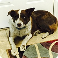 Adopt A Pet :: Lilly - Salt Lake City, UT