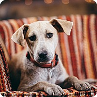 Adopt A Pet :: Summer - Portland, OR