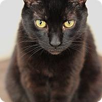 Adopt A Pet :: Nate - Long Beach, NY