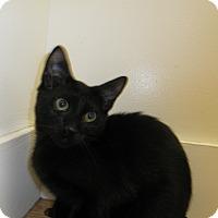 Adopt A Pet :: Magnum - Milwaukee, WI