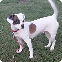 Adopt A Pet :: MOLLY - Wilmington, NC