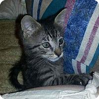 Adopt A Pet :: Phoebe - Raritan, NJ