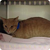 Adopt A Pet :: AJAX - Marietta, GA
