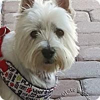 Adopt A Pet :: Bob Barker & Cassie - Ponte Vedra Beach, FL