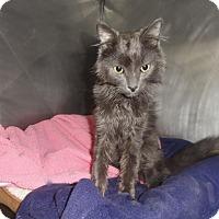 Adopt A Pet :: Smokey - Barnegat, NJ