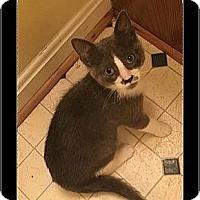 Adopt A Pet :: Dunkin - Waldorf, MD