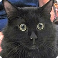 Adopt A Pet :: Mahogany - Germantown, MD