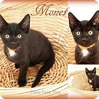 Adopt A Pet :: Monet - Stafford, VA