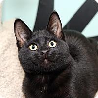 Adopt A Pet :: SABRINA - Royal Oak, MI