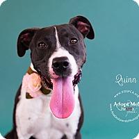 Adopt A Pet :: Quinn - Visalia, CA