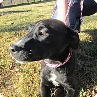 Adopt A Pet :: Loretta - Cumming, GA