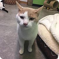 Adopt A Pet :: bruce - Bryan, OH