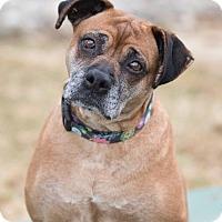 Adopt A Pet :: Allie - Mechanicsburg, OH