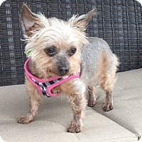 Adopt A Pet :: Poco - Ft Myers, FL