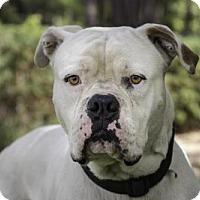 Adopt A Pet :: HUCK - West Palm Beach, FL