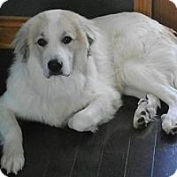 Adopt A Pet :: Thor - Carey, OH