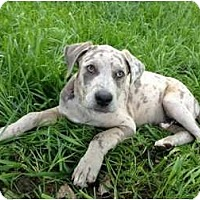 Adopt A Pet :: Christopher - Richmond, VA