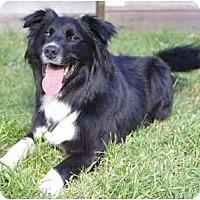 Adopt A Pet :: Harley - Glenrock, WY