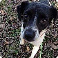 Adopt A Pet :: Spots - Staunton, VA