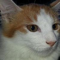 Adopt A Pet :: Ravenclaw - Phoenix, AZ