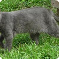 Adopt A Pet :: Kerryn - Gonzales, TX