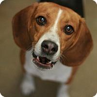 Adopt A Pet :: Blink - Canoga Park, CA