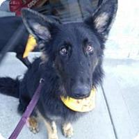 Adopt A Pet :: Oso - Louisville, KY