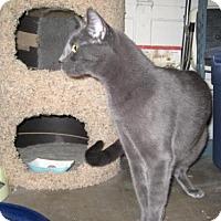 Adopt A Pet :: Benson - Agoura Hills, CA