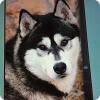 Adopt A Pet :: JEFFREY VON JESBERG - Los Angeles, CA