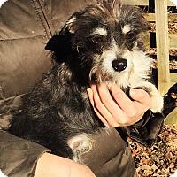 Adopt A Pet :: Handsome - Pewaukee, WI